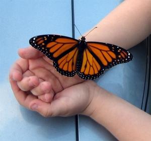 niño con mariposa