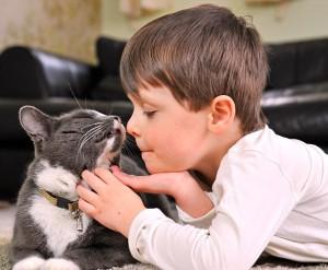 gato niño
